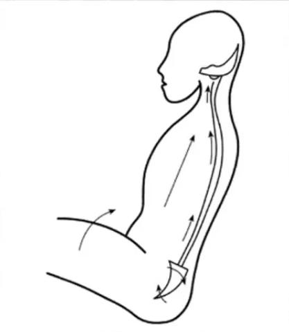 Clínica OMNIA - WIPLASH fase 1